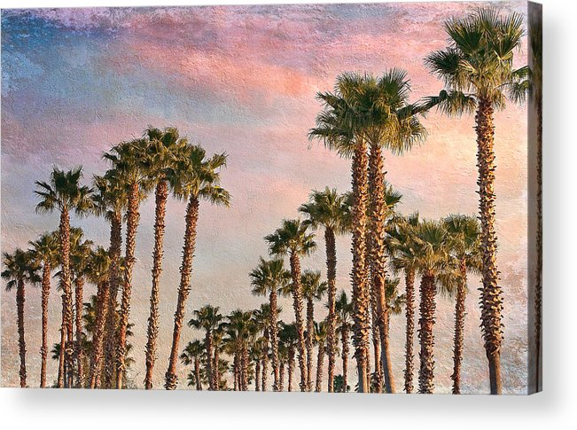 Palms Acrylic Print featuring the photograph Garden Of Palms by Stephen Warren