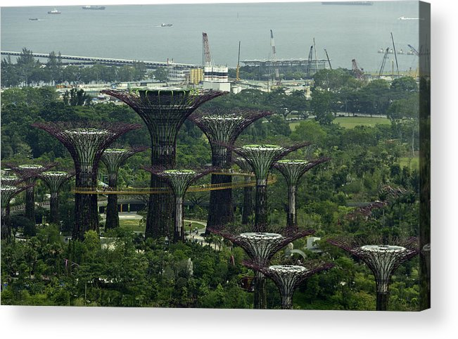 Asia Acrylic Print featuring the photograph Supertrees At The Gardens By The Bay In Singapore by Ashish Agarwal