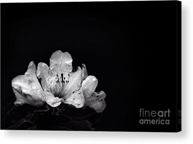 Kremsdorf Acrylic Print featuring the photograph Nocturnal Blossom by Evelina Kremsdorf