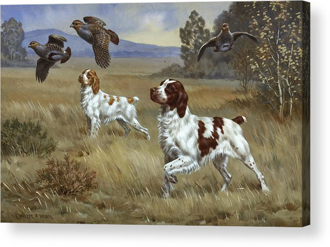 Illustration Acrylic Print featuring the photograph Brittany Spaniels Flush Three Birds by Walter A. Weber