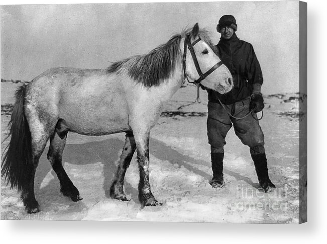 1910 Acrylic Print featuring the painting Edward Wilson (1872-1912) by Granger