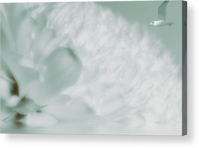 Carnation Acrylic Print featuring the photograph Flower And Bird by Helyn Broadhurst Cornille