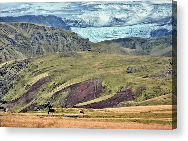Scenic Acrylic Print featuring the photograph Glacier Mountains Meadows Horses by David Halperin