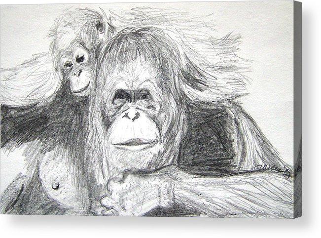Wildlife Acrylic Print featuring the drawing Gorillas by Vallee Johnson