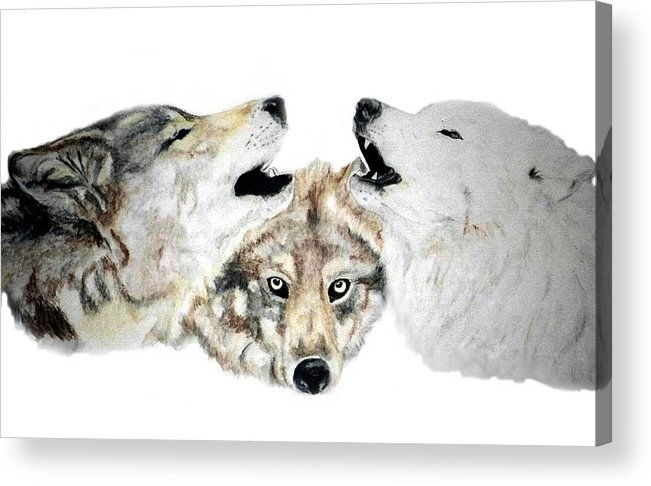 Wolves Acrylic Print featuring the painting Howling by Debra Sandstrom