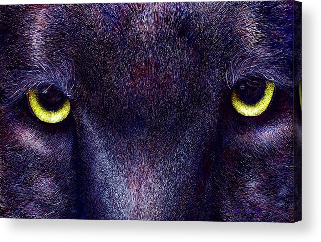 Cats Acrylic Print featuring the painting Hyptnotist The Black Panther by JoLyn Holladay