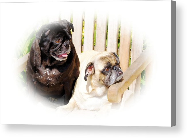 Dog Acrylic Print featuring the photograph Leroy And Mrs. Jones by Ellen Lerner ODonnell
