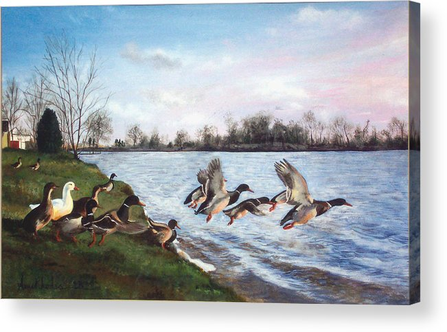 Birds Acrylic Print featuring the painting Lift Off by Anne Rhodes