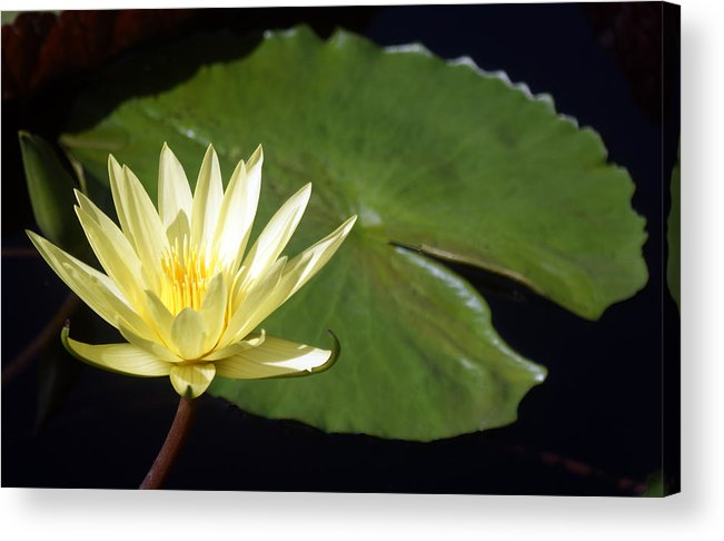 Flower Acrylic Print featuring the photograph Lily Nilly by Kat Dee