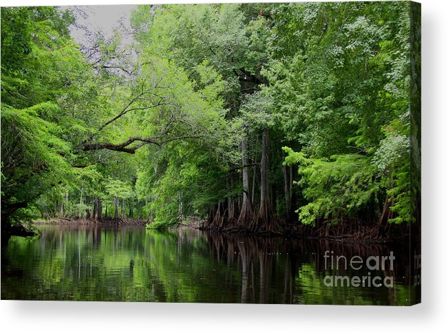 Withlacoochee River Acrylic Print featuring the photograph Mystical Withlacoochee River by Barbara Bowen