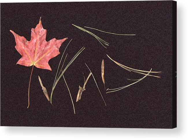 Leaf Acrylic Print featuring the photograph Secret Language Of The Forest by Kevin Callahan