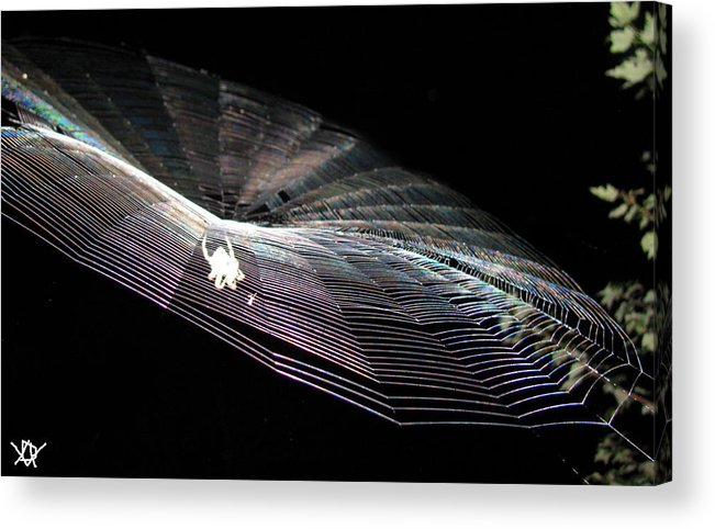 The Web We Weave Acrylic Print featuring the photograph The Web We Weave by Debra   Vatalaro