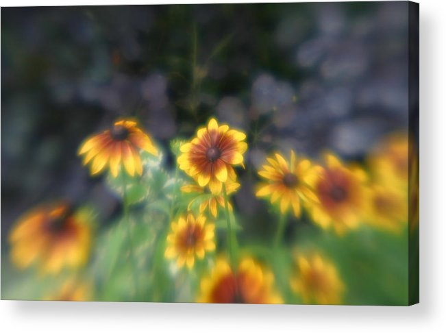 Acrylic Print featuring the photograph Yellow Daisies In Monets Garden by Jennifer McDuffie