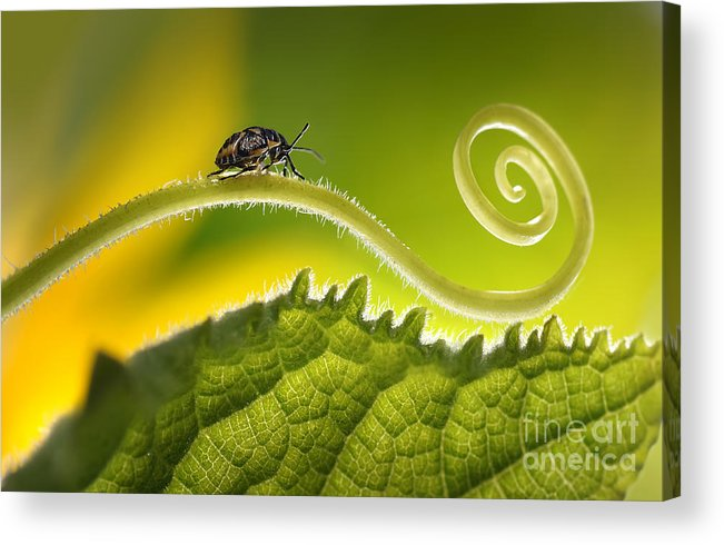Magic Acrylic Print featuring the photograph Beautiful Insects On A Leaf Close-up by Ledyx