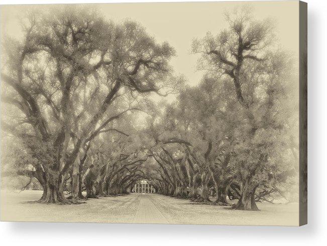 Oak Alley Plantation Acrylic Print featuring the photograph And Time Stood Still Sepia by Steve Harrington