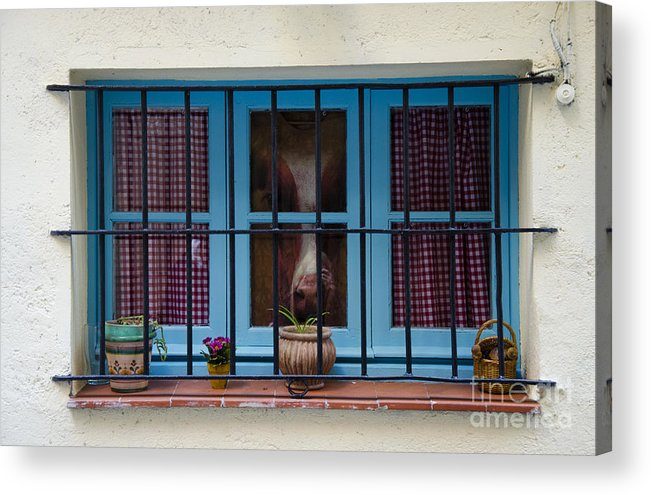 Buy Art Online Acrylic Print featuring the photograph Horse Behind The Window by Victoria Herrera