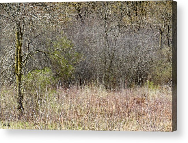 Deer Acrylic Print featuring the photograph Look Closer by Wild Thing