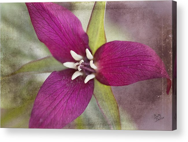Flower Acrylic Print featuring the photograph Red Trillium by Betty Denise