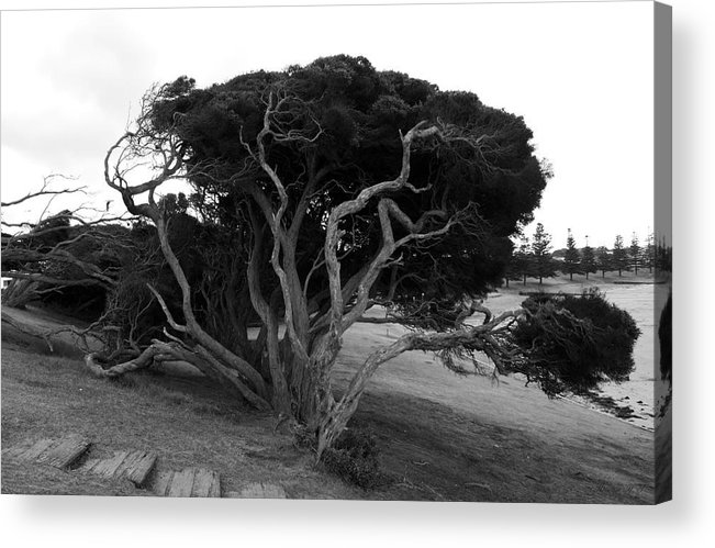 Beach Tree Acrylic Print featuring the photograph Sea Witch by Amanda Holmes Tzafrir