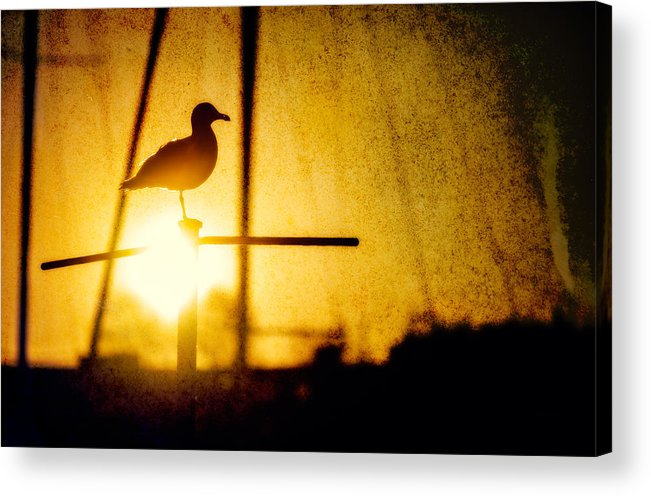 Granville Island Acrylic Print featuring the photograph Seagull In Harbor Sunset by Peter v Quenter