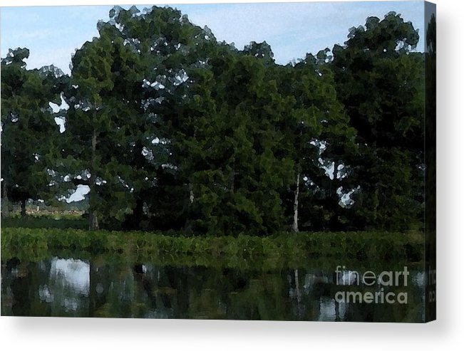 Cypress Trees Acrylic Print featuring the photograph Swamp Cypress Trees Digital Oil Painting by Joseph Baril