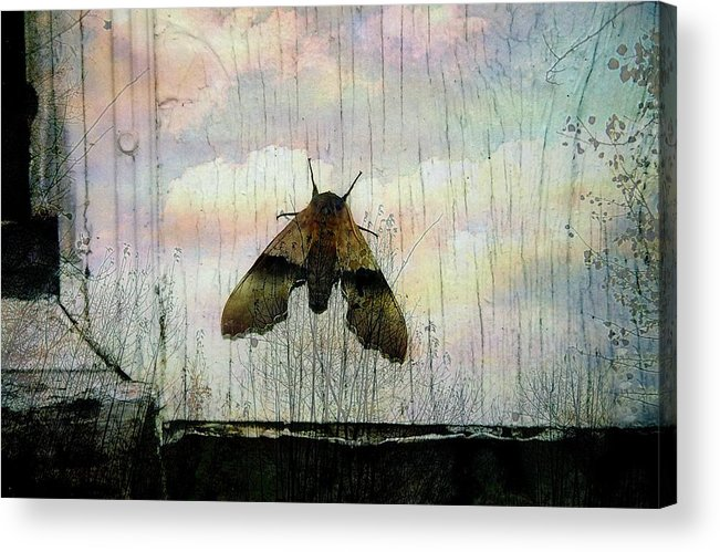 Surreal Acrylic Print featuring the photograph Just Arrived by Shirley Sirois