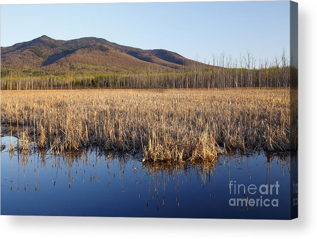 Cohos Regional Trail Acrylic Print featuring the photograph Pondicherry Wildlife Refuge - Jefferson New Hampshire by Erin Paul Donovan