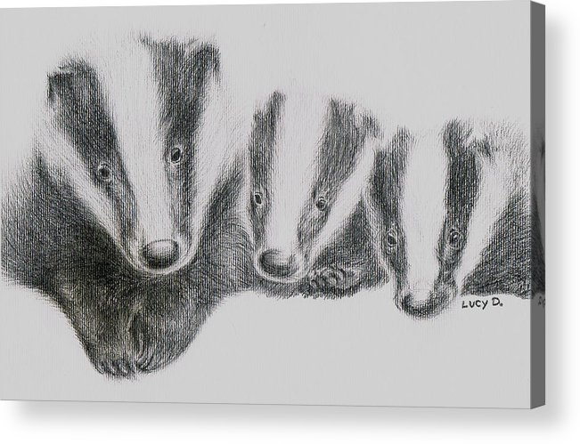 Badgers Acrylic Print featuring the drawing Badgers by Lucy D