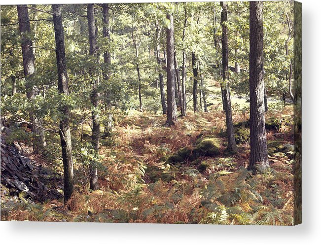 English Acrylic Print featuring the photograph English Woods And Autumn Ferns by Daniel Blatt