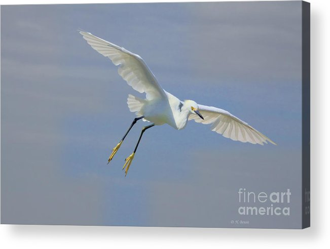 Egret Acrylic Print featuring the photograph Here I Come by Deborah Benoit
