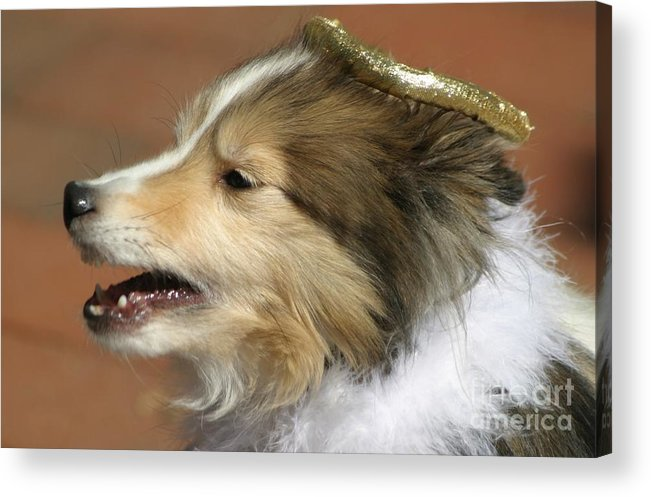 Dogs Acrylic Print featuring the photograph Little Angel by Living Color Photography Lorraine Lynch