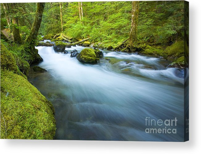 Skate Creek Acrylic Print featuring the photograph Out Of The Rainforest by Mike Dawson