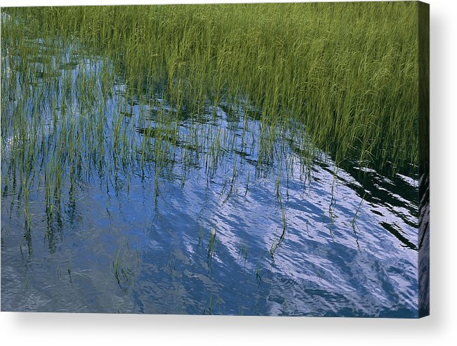 United States Of America Acrylic Print featuring the photograph Rippling Water Among Aquatic Grasses by Heather Perry