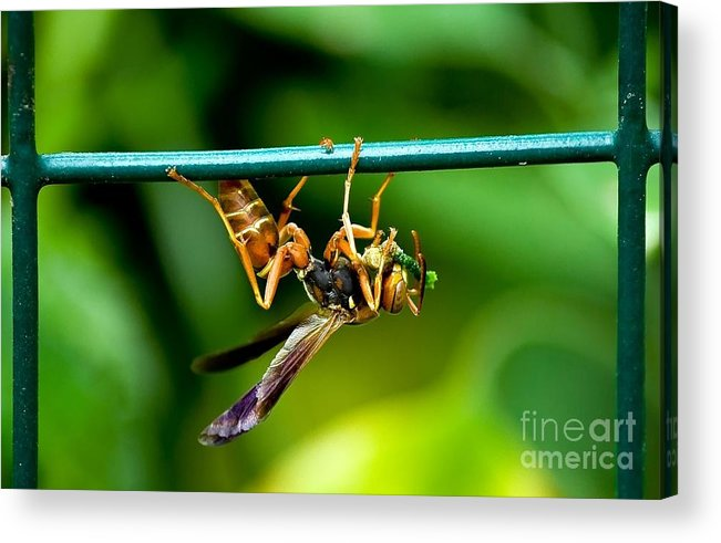 Wasp Acrylic Print featuring the photograph Snack Time by Beth Phifer