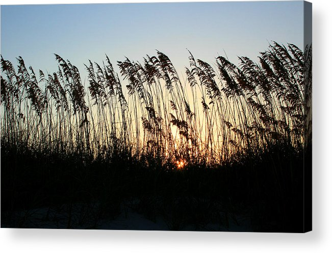 Beach Acrylic Print featuring the photograph Sunset Sea Oats by Barbara Northrup