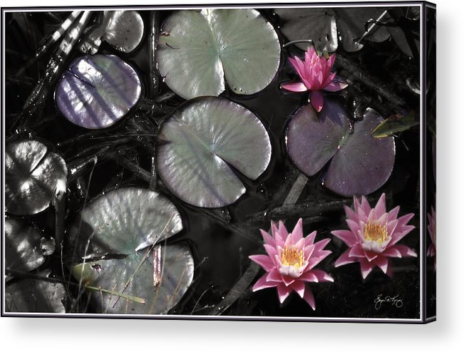 Water Lily Acrylic Print featuring the photograph Twin Lily by Wayne King