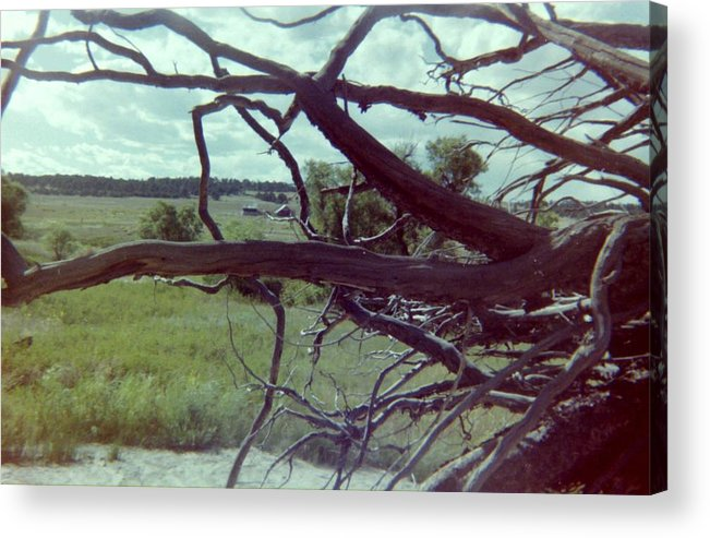 Roots Acrylic Print featuring the photograph Uprooted by Bonfire Photography