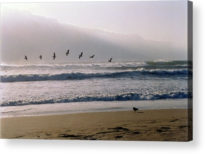Seascape Acrylic Print featuring the photograph Pelican Brief by Brande Barrett