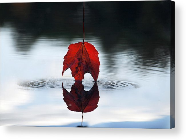 Autumn Acrylic Print featuring the photograph Autumns Final Descent by William Carroll