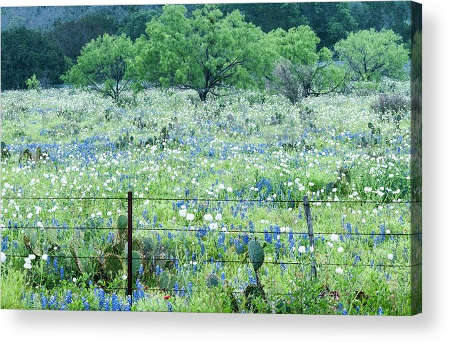 Cactus Acrylic Print featuring the photograph Blue Bonnets,poppies And Willow Tree 2 by Usha Peddamatham