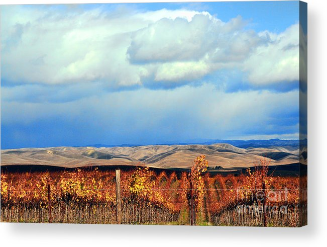 Landscape Acrylic Print featuring the photograph Central Coast Harvest by Lorrie Morrison