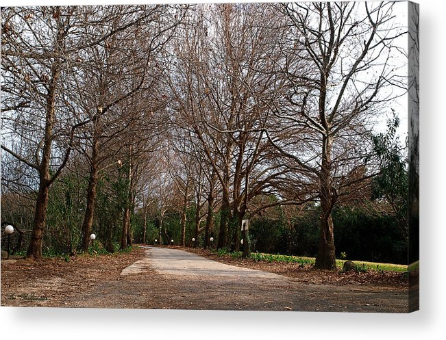Country Acrylic Print featuring the photograph Country Road by Arik Baltinester