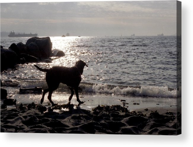 Dog Acrylic Print featuring the photograph Dog On Beach Wc 2 by Lyle Crump