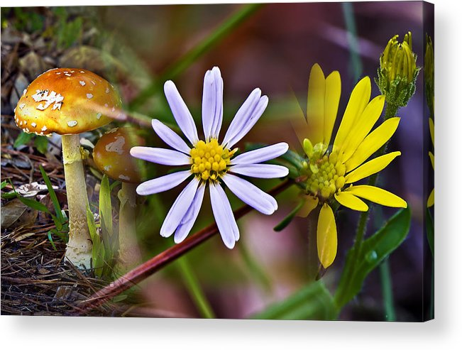 Digital Art Acrylic Print featuring the photograph Flower-mushroom Collage by Michael Whitaker