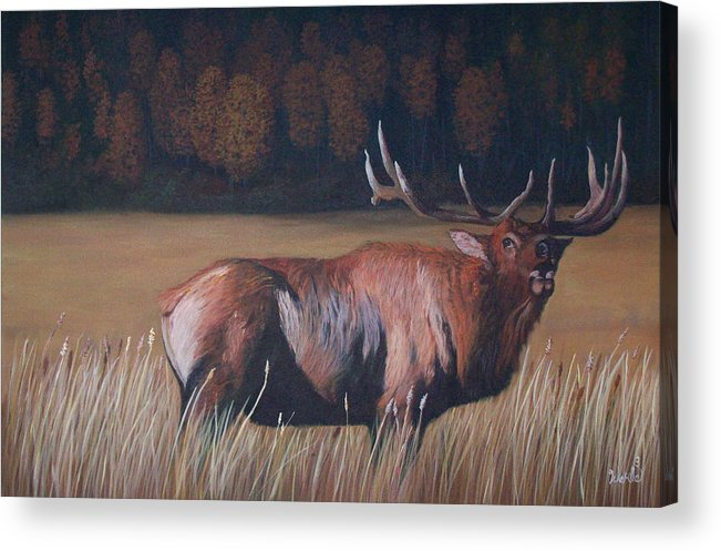 Bull Elk Paintings Acrylic Print featuring the painting Go Big Or Go Home by Bill Werle