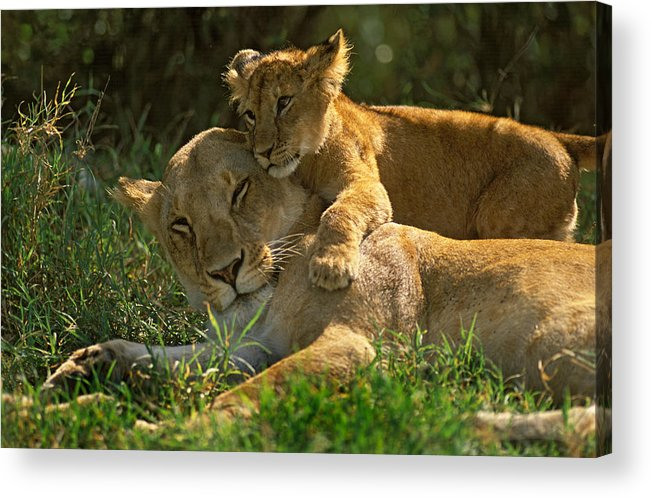 Africa Acrylic Print featuring the photograph I Love My Mother by Johan Elzenga