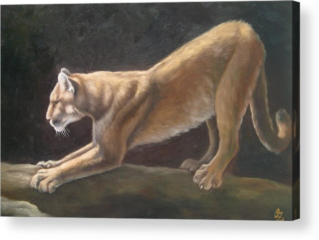 Cougar Acrylic Print featuring the painting Morning Stretch by Oksana Zotkina