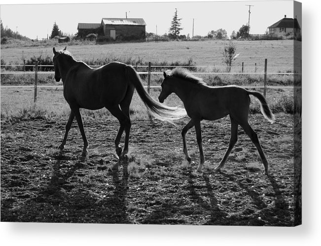 Black Acrylic Print featuring the photograph Mother And Baby by J D Banks
