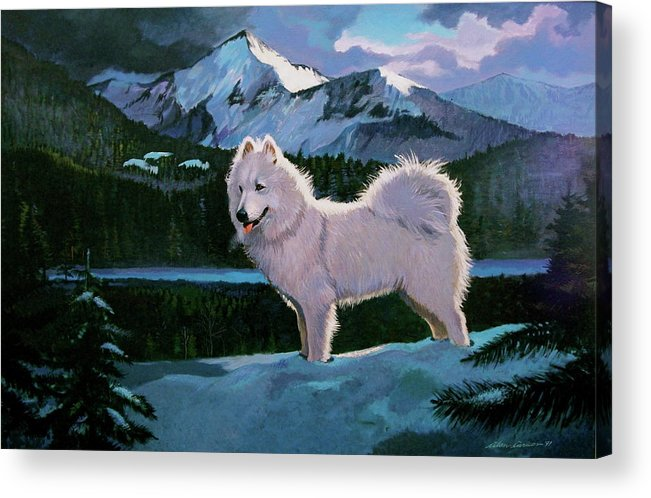 Dogs Samoyed Sled Dog Acrylic Print featuring the painting My Dog Blizzard . by Alan Carlson
