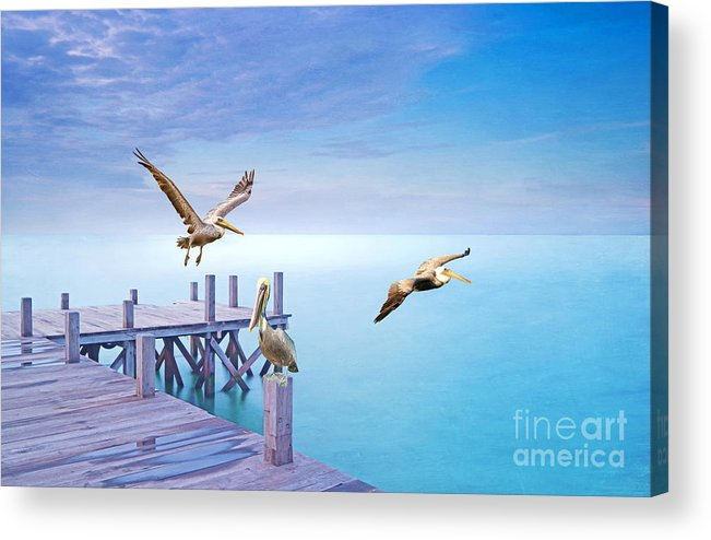 Brown Pelicans Acrylic Print featuring the photograph Pelican Party by Laura D Young